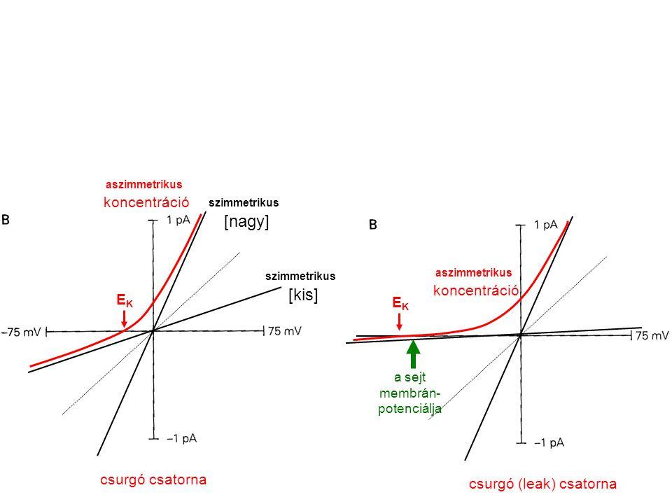 [nagy] [kis] koncentráció koncentráció EK EK csurgó csatorna